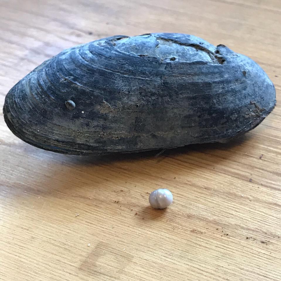 Perle à côté d'une moule perlière