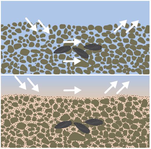 Schéma colmatage substrat